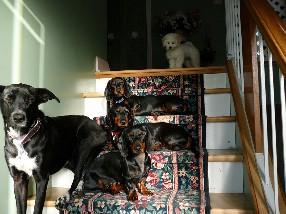 Maison Canine Genève