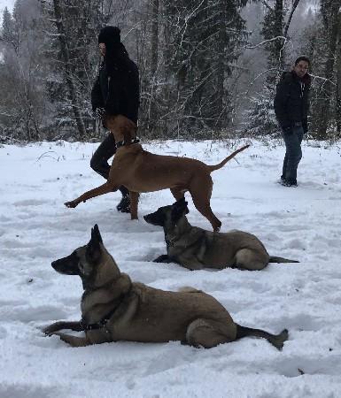Education pour chiens de famille