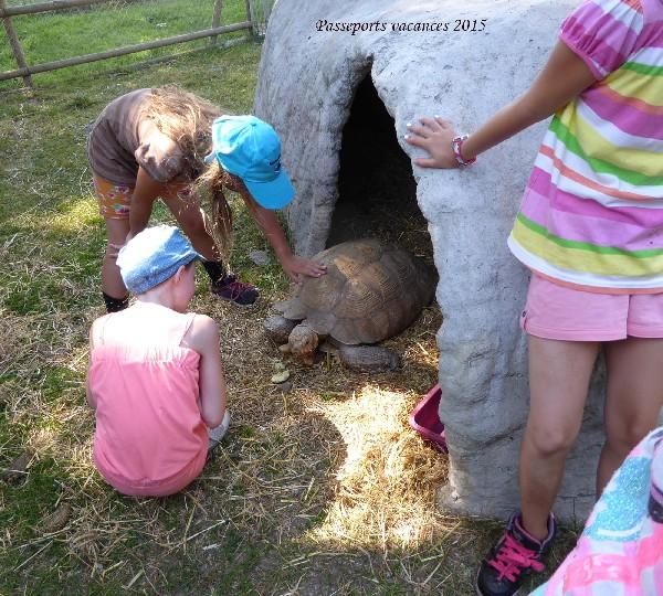Camps animaliers pour enfant de 8 à 14 ans.