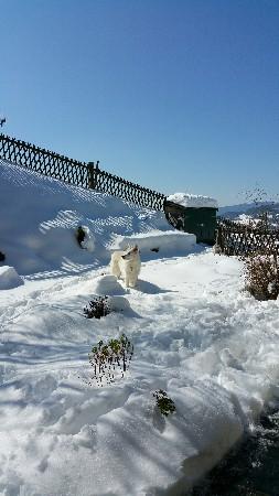 Au jardin (en hiver)